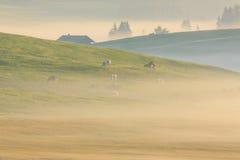 Nebbia nelle alpi, dolomia, Italia di mattina Immagini Stock
