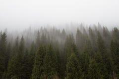 Nebbia nelle montagne Immagini Stock