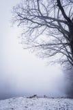 Nebbia pesante sopra lo stagno congelato inverno Fotografia Stock