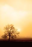 Nebbia, quercia e Sun nella seppia Immagine Stock