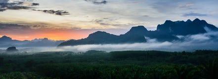 Nebbia sopra area di agricoltura della palma da olio Fotografie Stock Libere da Diritti