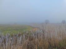Nebbia sopra i prati e la canna Fotografie Stock Libere da Diritti