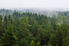 Nebbia sopra la foresta Fotografia Stock