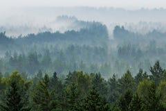 Nebbia sopra la foresta Fotografia Stock Libera da Diritti