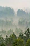 Nebbia sopra la foresta Immagini Stock