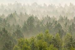 Nebbia sopra la foresta Immagine Stock