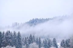 Nebbia sopra la foresta conifera di inverno Immagine Stock Libera da Diritti