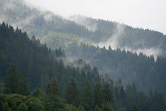 Nebbia sopra la foresta nelle montagne fotografia stock libera da diritti