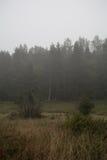 Nebbia sopra la foresta in Svezia Fotografia Stock