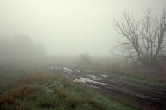 Nebbia spessa Immagine Stock Libera da Diritti