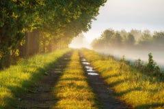 Nebbia spessa di mattina della foschia del sentiero forestale di mattina in autunno Immagine Stock