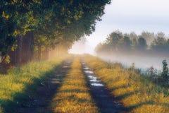 Nebbia spessa di mattina della foschia del sentiero forestale di mattina in autunno Fotografie Stock Libere da Diritti