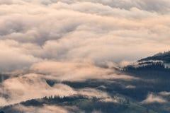 Nebbia spessa di mattina sopra la foresta Fotografie Stock Libere da Diritti