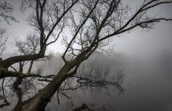 Nebbia su Shannon Town Immagini Stock Libere da Diritti