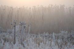 Nebbia su un fiume Fotografie Stock