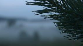 Nebbia sul campo, estate stock footage
