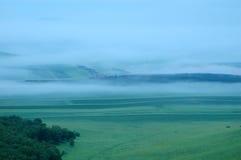 Nebbia sul pascolo Fotografia Stock Libera da Diritti