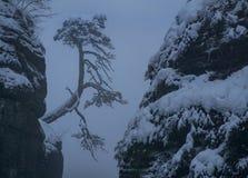 Nebbia sul ponte nell'inverno, parco nazionale di Saxon Svizzera, montagne dell'arenaria di Elba, Germania di Bastei fotografia stock