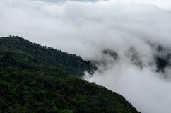 Nebbia sull'alta montagna nel parco nazionale di Phu Ruea, provincia di Loei, T fotografia stock libera da diritti