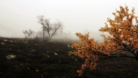 Nebbia sulla palude Immagini Stock