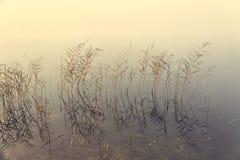 Nebbia sulla riva del lago fotografia stock libera da diritti