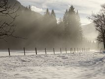 Nebbia sulla strada Immagini Stock