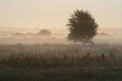 Nebbia a terra Fotografie Stock