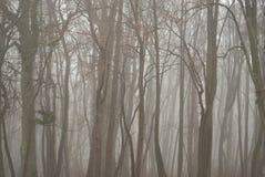 Nebbia triste in una foresta nuda Fotografie Stock Libere da Diritti