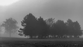 Nebbia in un parco Fotografia Stock