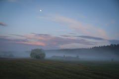 Nebbia in un prato al tramonto Immagine Stock
