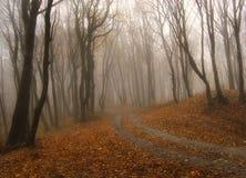 Nebbia in una foresta in autunno fotografie stock