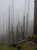 Nebbia in una foresta bruciata immagini stock libere da diritti