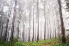 Nebbia in una foresta verde immagini stock libere da diritti