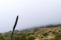 Nebel über Berg und Wald Stockbild