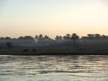 Nebel über dem Fluss Nil Lizenzfreie Stockfotografie