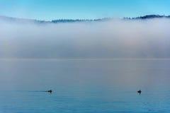 Nebel über dem Wasser Stockbild