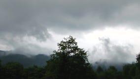 Nebel über den Wäldern stock video footage
