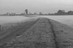 Nebel über der Wiese Stockbilder
