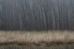 Nebel über einer Wasserwiese Lizenzfreies Stockfoto