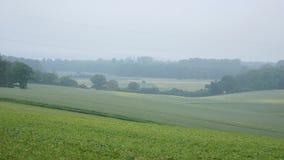 Nebel über Feldern und Wiesen Stockfoto