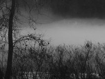 Nebel über Fluss Stockfotografie