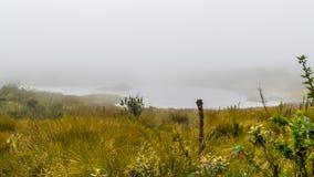 Nebel über Gebirgssee und -gras Stockfotos