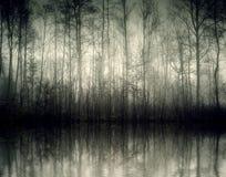 Nebel Stock Photography