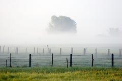 Nebel Lizenzfreies Stockfoto
