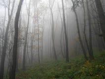 Nebel 1 Lizenzfreies Stockbild