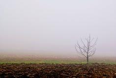 Nebel auf dem Feld Stockfotos