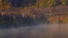 Nebel auf dem Morgensee stock footage