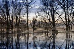 Nebel auf dem Wasser Stockfotografie