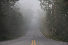 Nebel auf dem Weg Lizenzfreie Stockfotografie