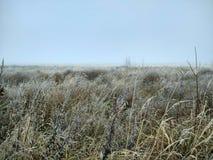 Nebel auf dem Weizengebiet stockfoto